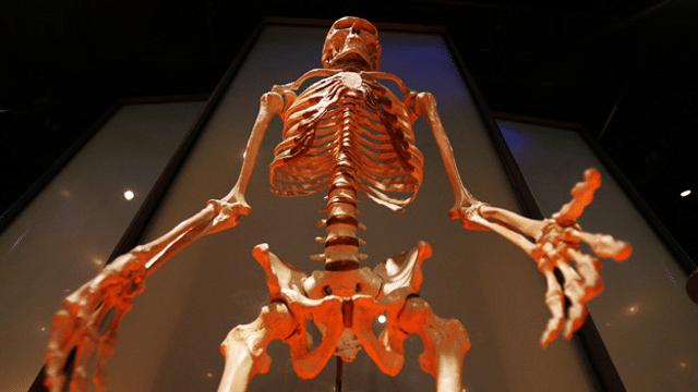 Gesunde Knochen im Alter