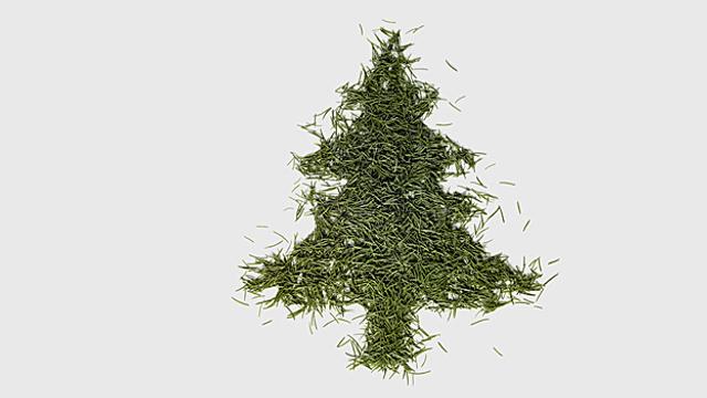 Den Tannenbaum richtig entsorgen