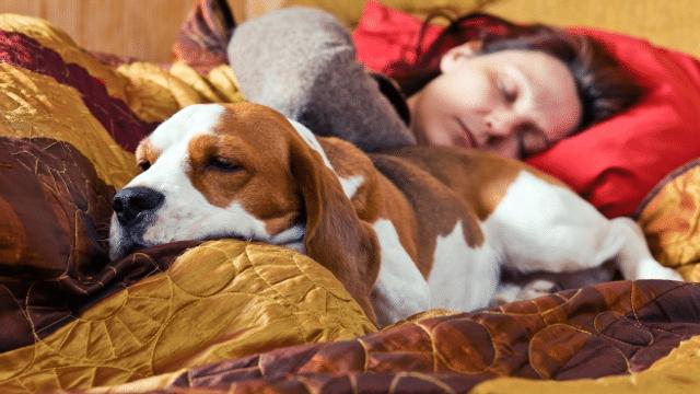 Schmusealarm - was tun gegen Erreger von Haustieren?