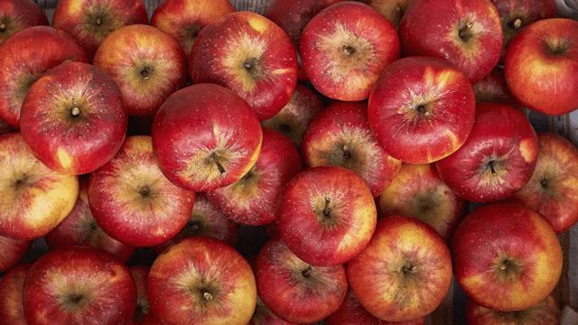 Bio-Äpfel aus Neuseeland sorgen für rote Köpfe