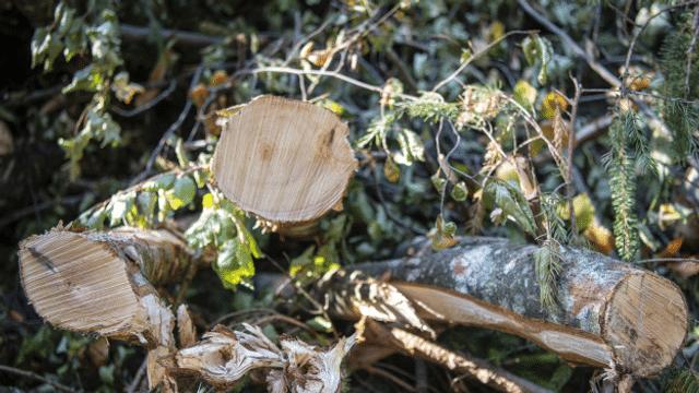 Der Wald in Frankreich leidet. Wie geht es dem Wald in der Schweiz?