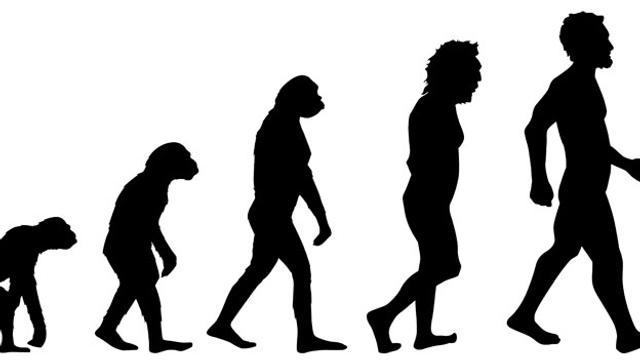 Sprache verstehen als Resultat der Evolutionsgeschichte