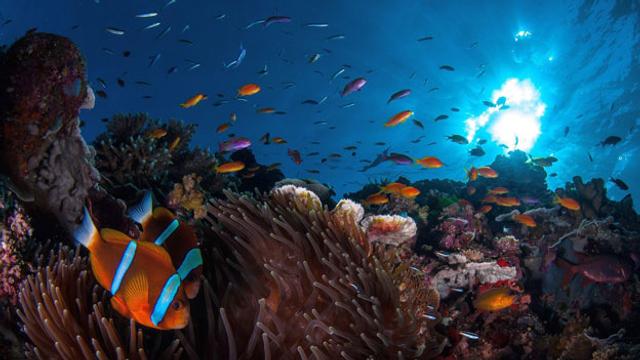 Australien: Great Barrier Reef vorerst kein «gefährdetes Welterbe»