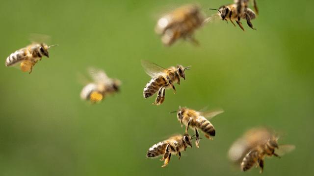 12-Punkte-Programm zum Schutz der Insekten