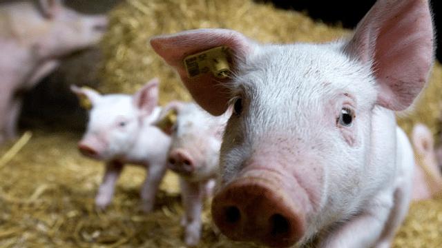 Sommerserie: zu Tisch - Der Fleischverzehr steigt trotz Warnungen