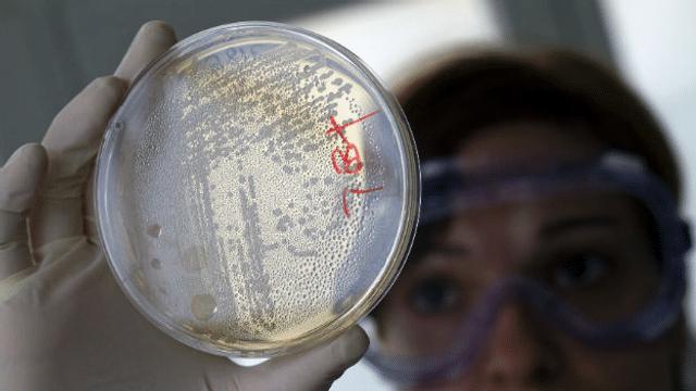 «Die Forscher haben eine Art Bakterien-WG entwickelt»