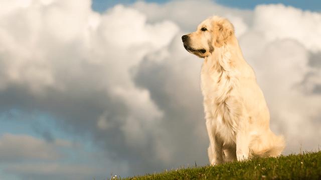 Kennen Hunde Muskelkater?
