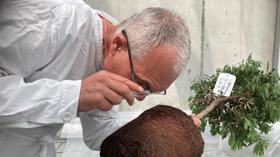 Im Forschungsinstitut Agroscope der Schmierlaus auf der Spur
