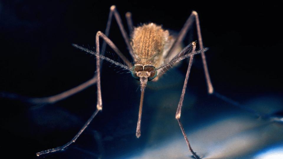 Stechmücken-ABC: Was vor den Blutsaugern schützt