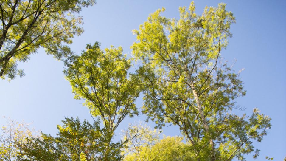 Klimawandel im Schweizer Wald – Kreativität ist gefragt