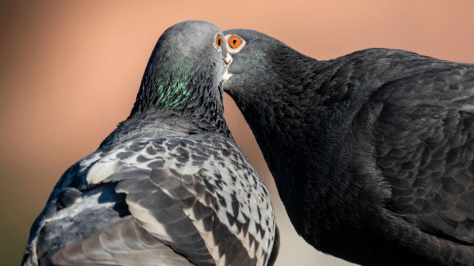 Eine Wohngemeinschaft von Tieren und Menschen