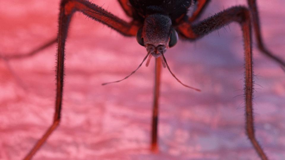 Gene Drive – Streit um Eingriff ins Erbgut