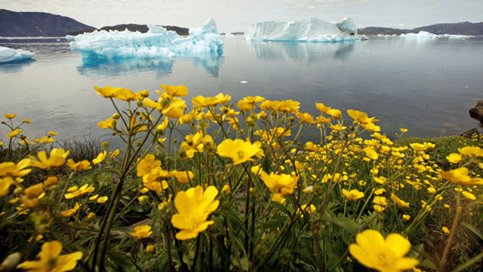 Grönland will zurück auf die Weltbühne