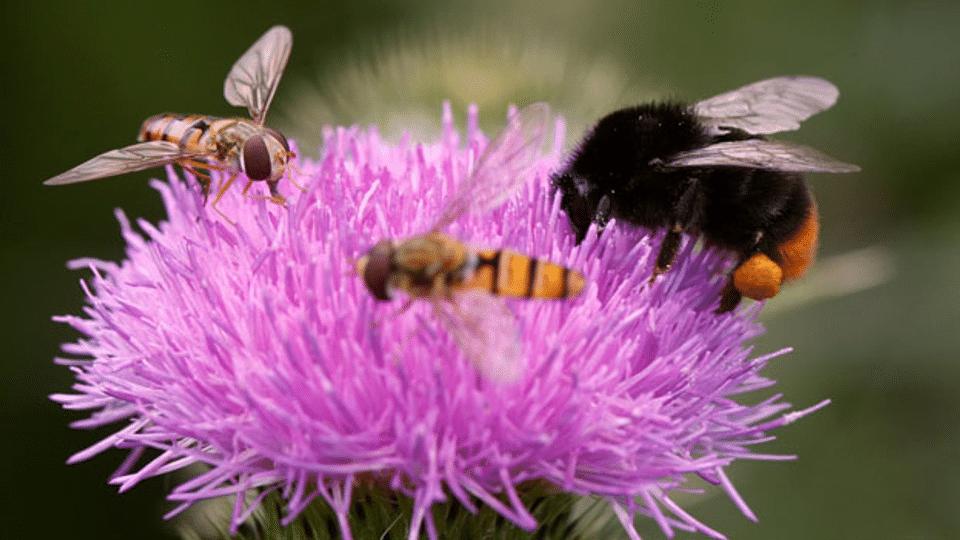 Pestizid verstärkt sich gegenseitig