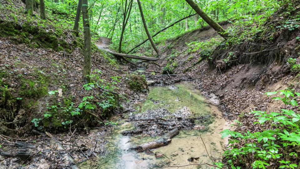 Der Wald profitiert vom nassen Wetter