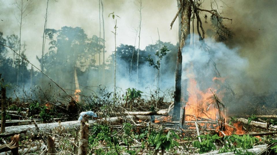 Kolumbien: 65 ermordete Umweltschützende im Jahr 2020