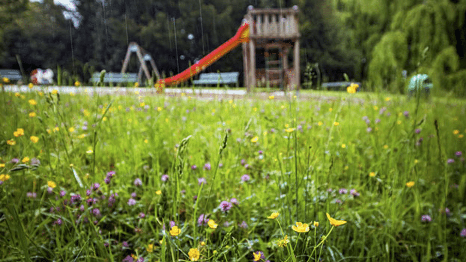 Dioxinbelastung in Lausanne höher als vermutet
